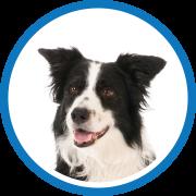 Medium Coat Hair - DOG BOARDING IN CHAPEL HILL, NC