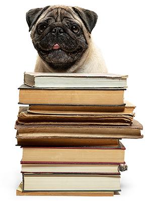Durham 245095659 300 - Dog Day School Durham NC