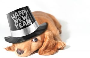Chapel Hill Day School NC New Years Top Dog 300x194 - Tips for Managing Your Dog on New Years