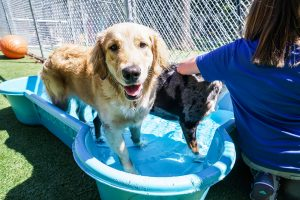 Chapel-Hill-Dog-Daycare-NC