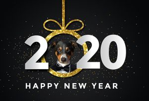 Chapel Hill Grooming New Years Top Dog e1577706887174 300x203 - Tips for Managing Your Dog on New Years