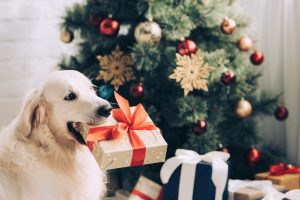 Christmas picture 300x200 - Dealing with Holiday Stress with Your Dog
