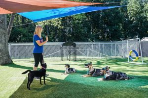 Doggie Day School 300x200 - Dog Daycare School NC