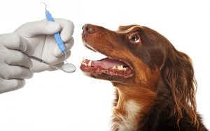 Dental Month 300x188 - National Pet Dental Health Month