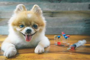 AdobeStock 197980319 300x200 - Why It's Important to Vaccinate Your Pet