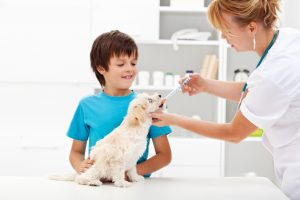 AdobeStock 43244514 300x200 - Why It's Important to Vaccinate Your Pet