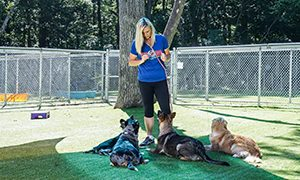 Top Dog Trainers 300x180 - What Does It Take to Be a Certified Dog Trainer?