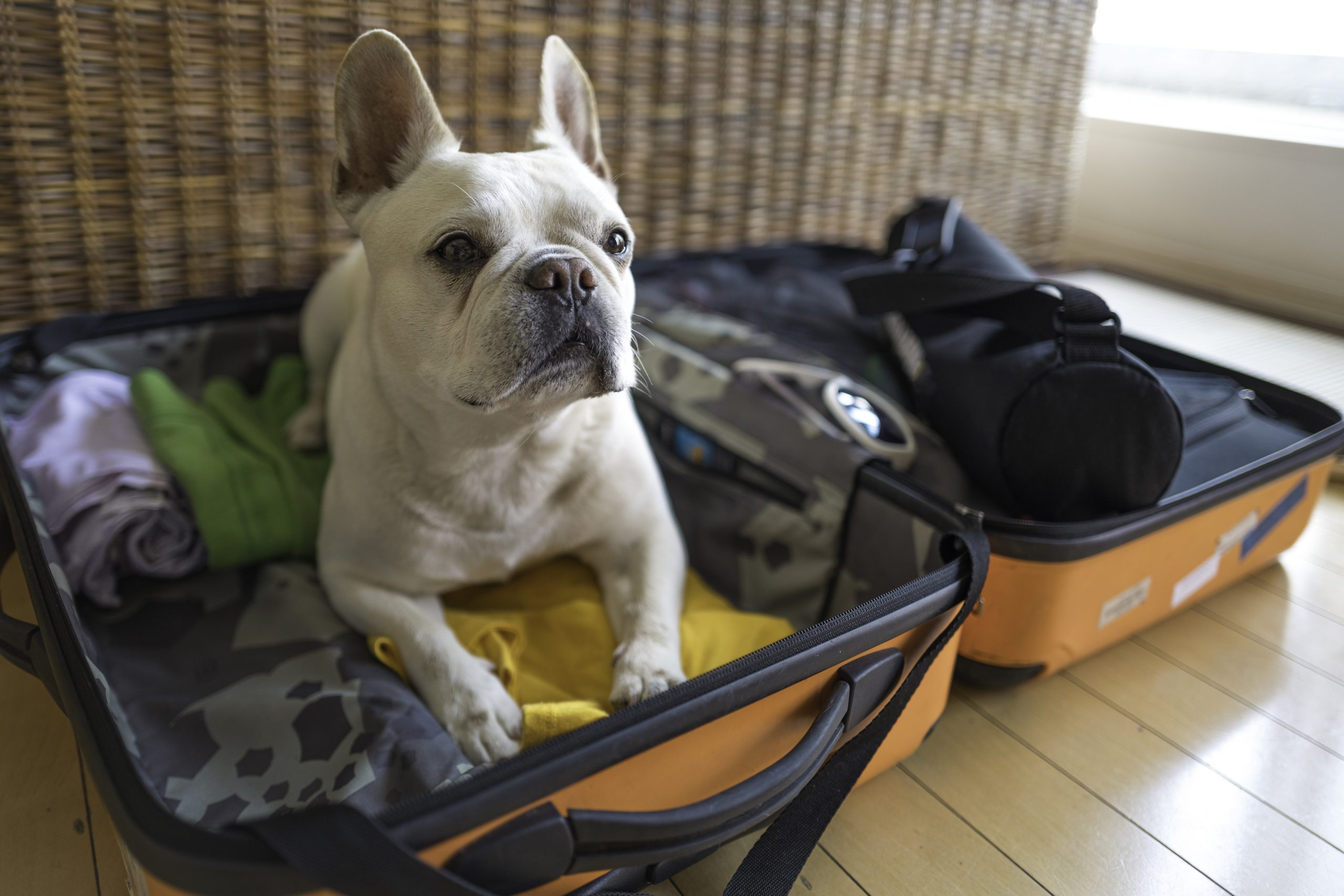 iStock 1154776482 scaled - Prep the Pup: How to Prepare Your Pet for a Boarding Kennel